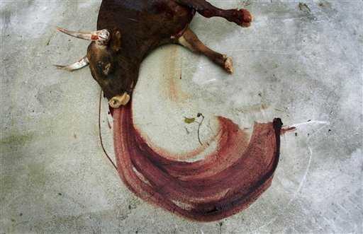 """L'image """"http://www.iwab.org/Pamplona%207%20July%202007%20touro%20morto.jpg"""" ne peut être affichée car elle contient des erreurs."""