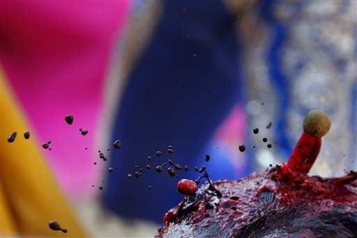 """L'image """"http://www.iwab.org/Pamplona%20July%202007.jpg"""" ne peut être affichée car elle contient des erreurs."""